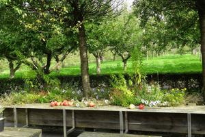 Weldadig Oord - Fruithof Frederiksoord - boomgaard