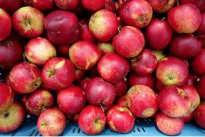 Weldadig Oord - Fruithof Frederiksoord
