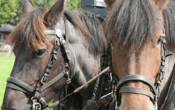 Weldadig Oord - Paard en Erfgoed